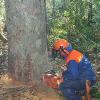 Veja a íntegra da MP que altera o novo Código Florestal