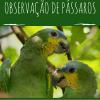 Ebook gratuito ensina a observação de passáros e incentiva a educação ambiental