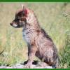 Sim, os animais têm personalidade, afirma biólogo