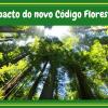 Impactos econômicos do Novo Código Florestal