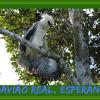 Ninhos de gavião real, ave em risco de extinção, são encontrados no sul da Bahia