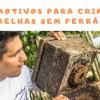 ONG incentiva a criação de abelhas sem ferrão na Amazônia