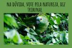 Proteção da Natureza deve prevalecer em decisões judiciais, afirma STJ