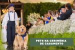 Pets roubam as cenas na cerimônia de casamento, mas requerem cuidado e respeito