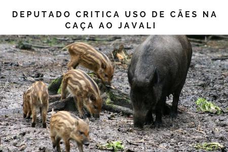 Javali2